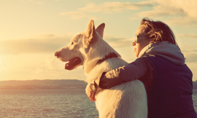 Animal Law  The legal community is slowly  recognizing our furry friends are family.