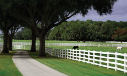 Lose Yourself  in the Wonder  of BG Ocala  Ranch
