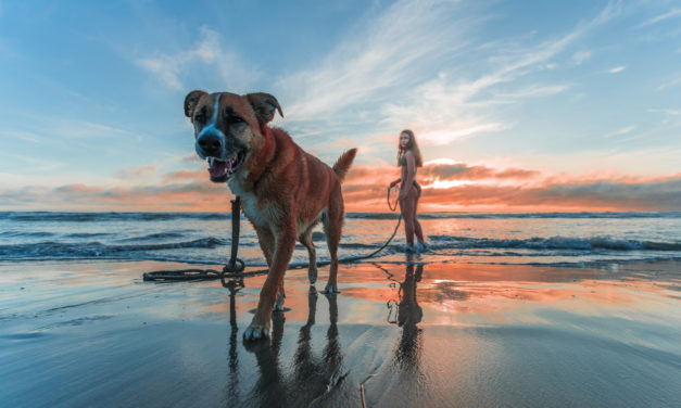 5 Fun Fall Activities for You & Your Dog